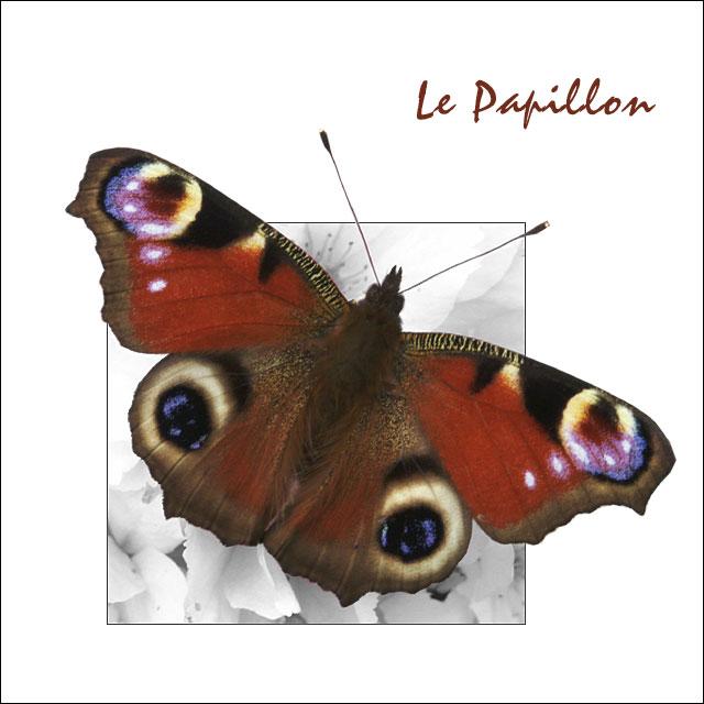 Le Papillon II