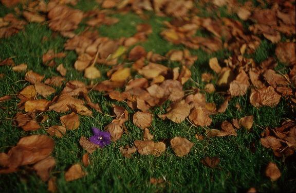 Le passage a l'automne