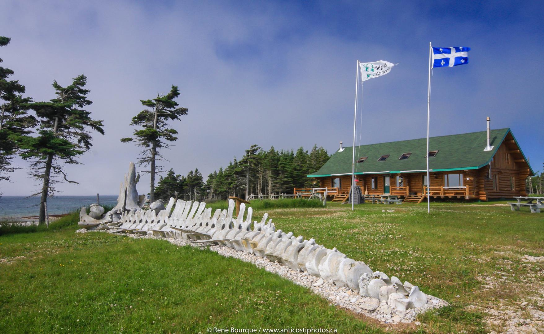 Le pavillon Chicotte la mer et les ossements de la baleine Pita.