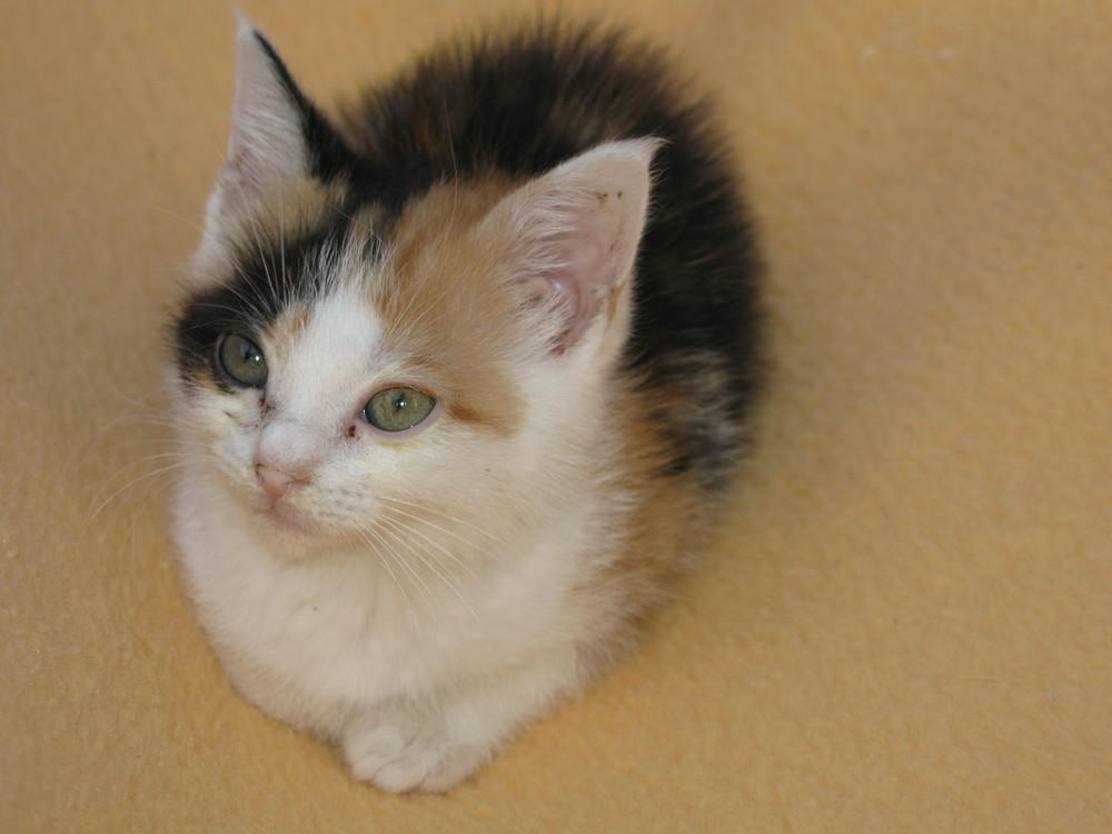 le petit chat de Louise