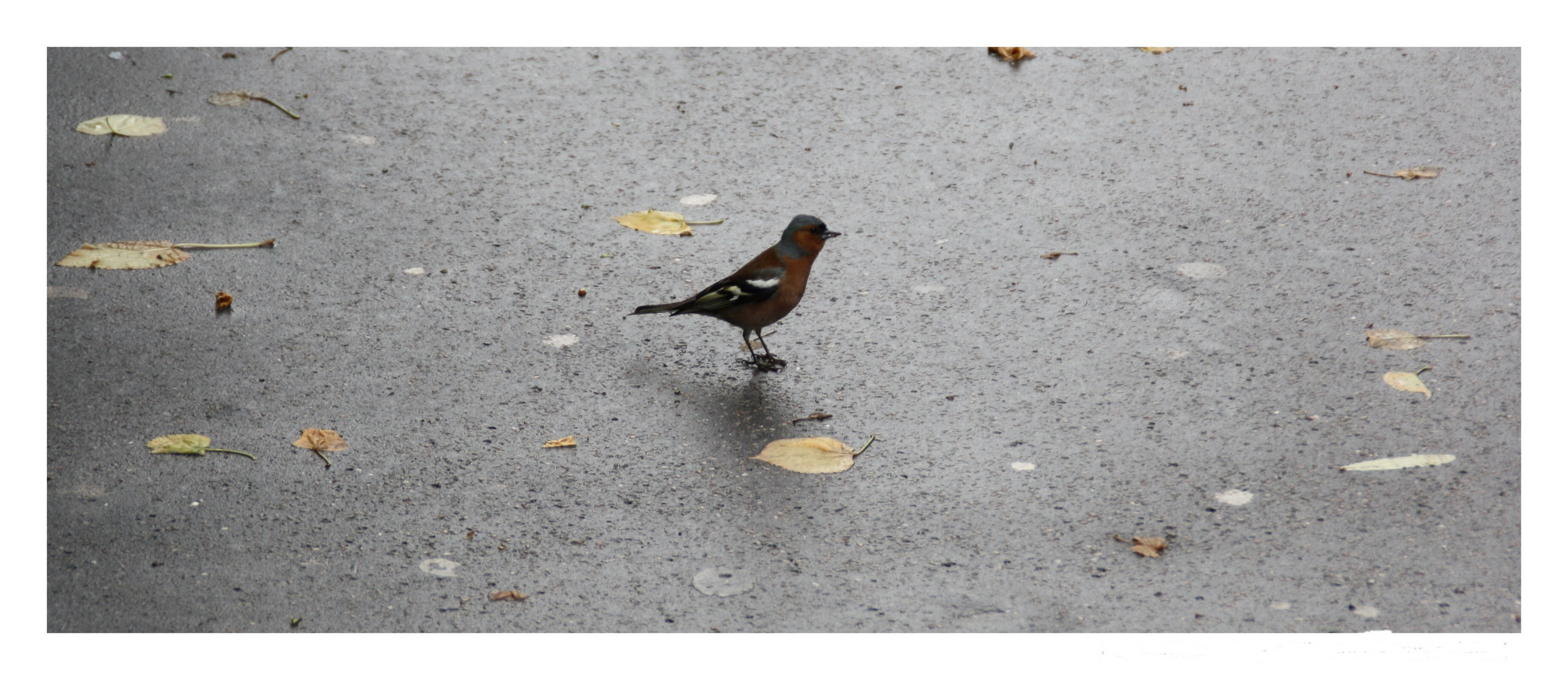 Le petit oiseau va sortir :)