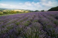 Le petite Provence