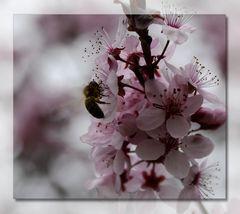 * le printemps *