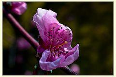 Le printemps à coeur ouvert