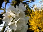 Le printemps arrive...