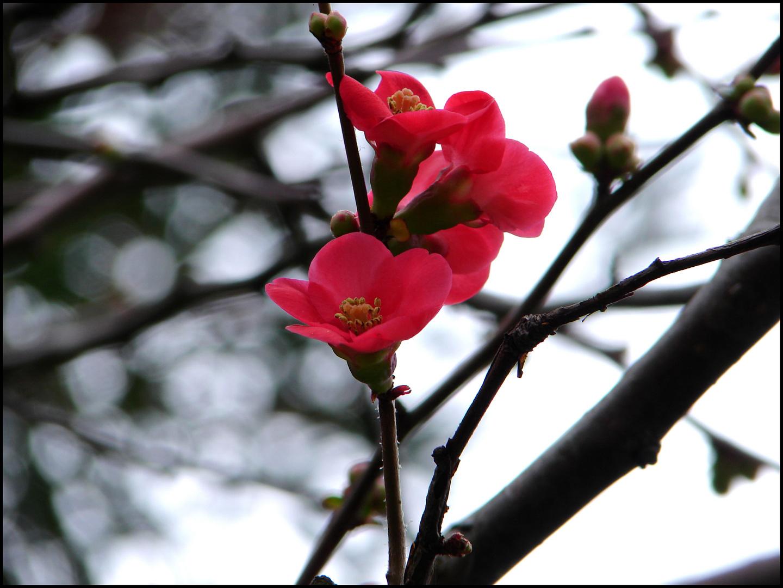 Le printemps arriverait-il ? Trop tôt!