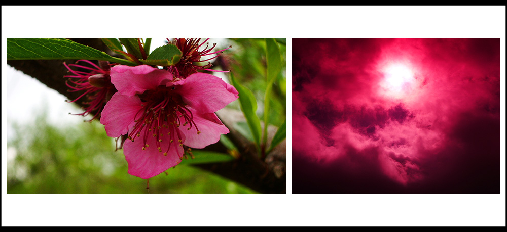le printemps dans les pyrenées orientales