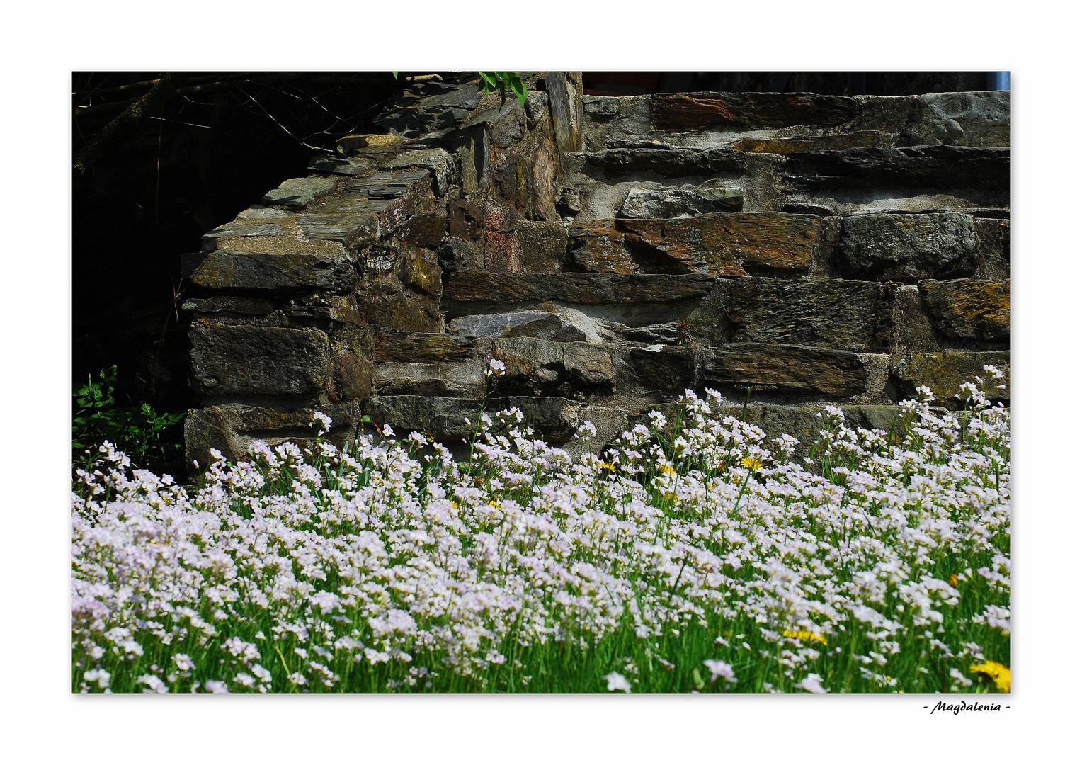 Le printemps des veilles pierres