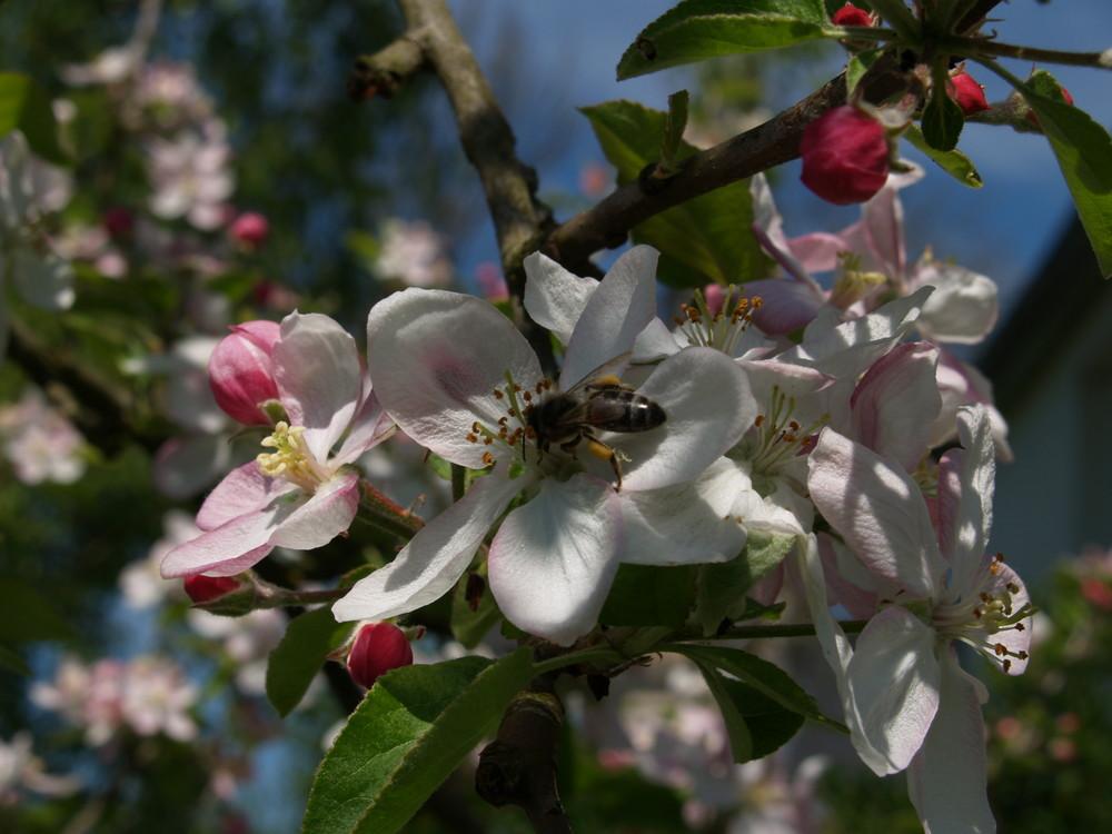 le printemps et cet fleurs