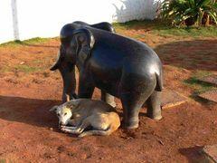 Le p'tit éléphant ... / the little elephant ...