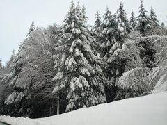 Le revermont sous la neige 1