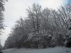 Le revermont sous la neige 7
