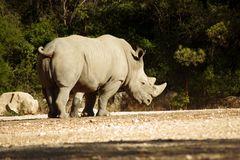 Le rhinocéros du zoo de Montpellier ....