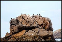 Le rocher aux Cormorans