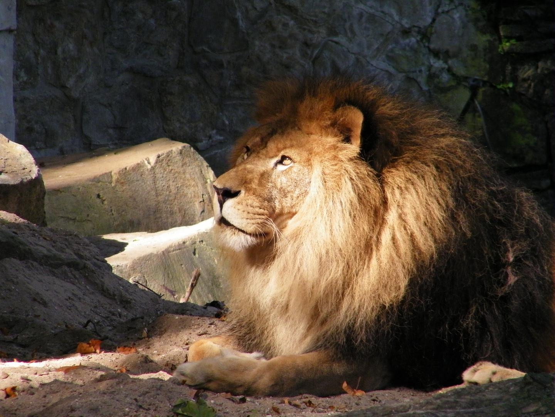 Le Roi Soleil