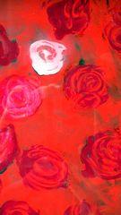 Le Rose cremisi