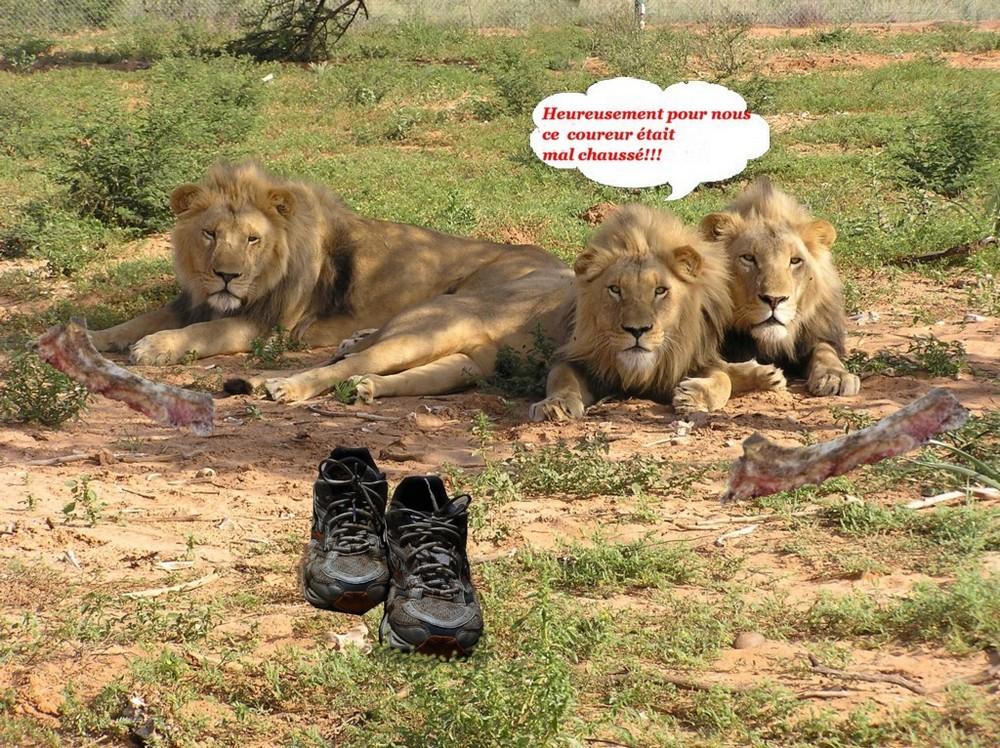 Le safari.......inachevé!