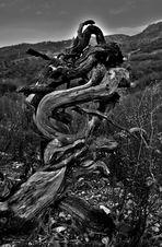 ...le sculture di madre natura!