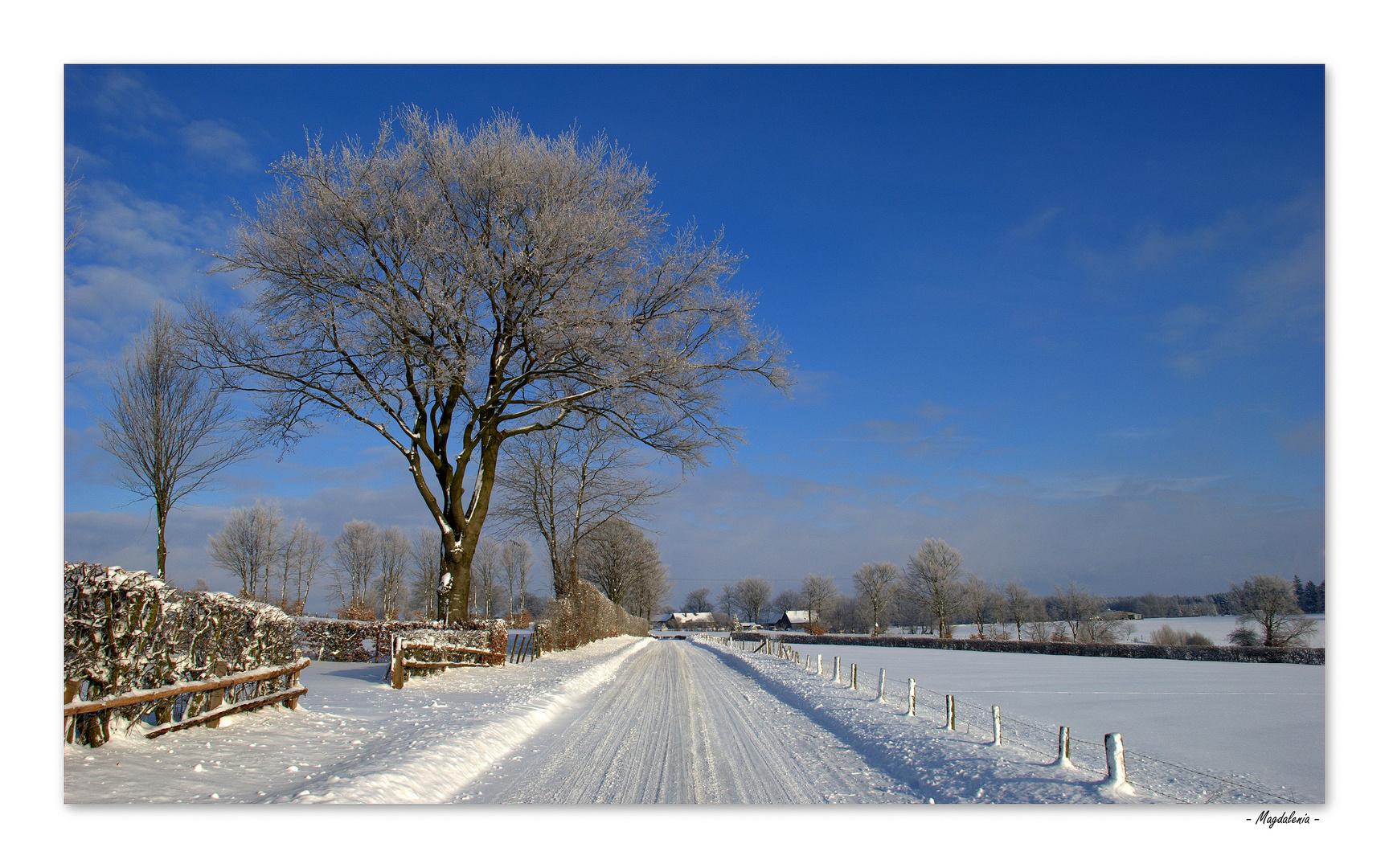 Le silence de l'hiver -1