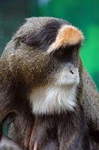 Le singe songeur