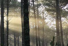 le soleil dans la forêt !