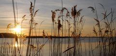Le soleil décline sur le lac du Der