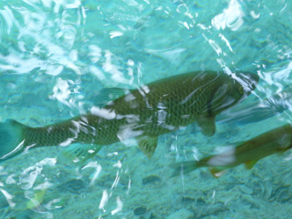 Le squame del pesce