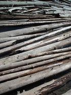 Le tapis de troncs