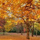 le tapis orange