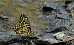 * le temps des papillons *