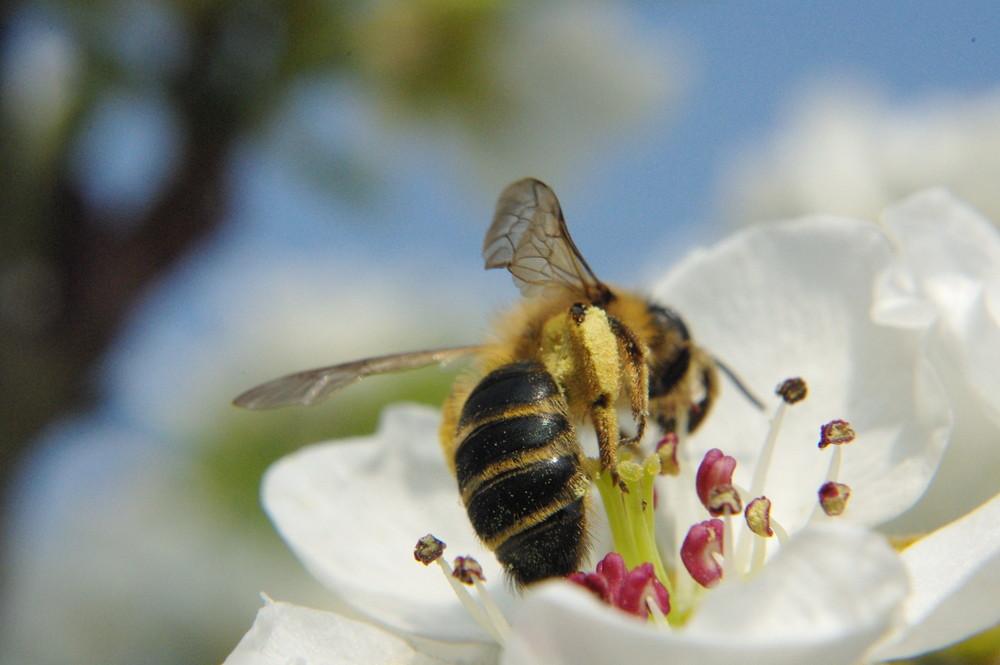 le travail des abeilles