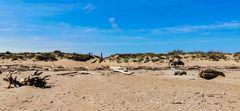 Le vélo sur la plage