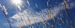 Le vent souffle l'herbe
