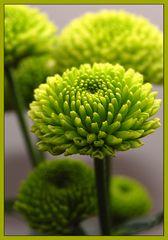 Le vert est la couleur de l'espoir