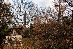 Le vieil agachon en hiver