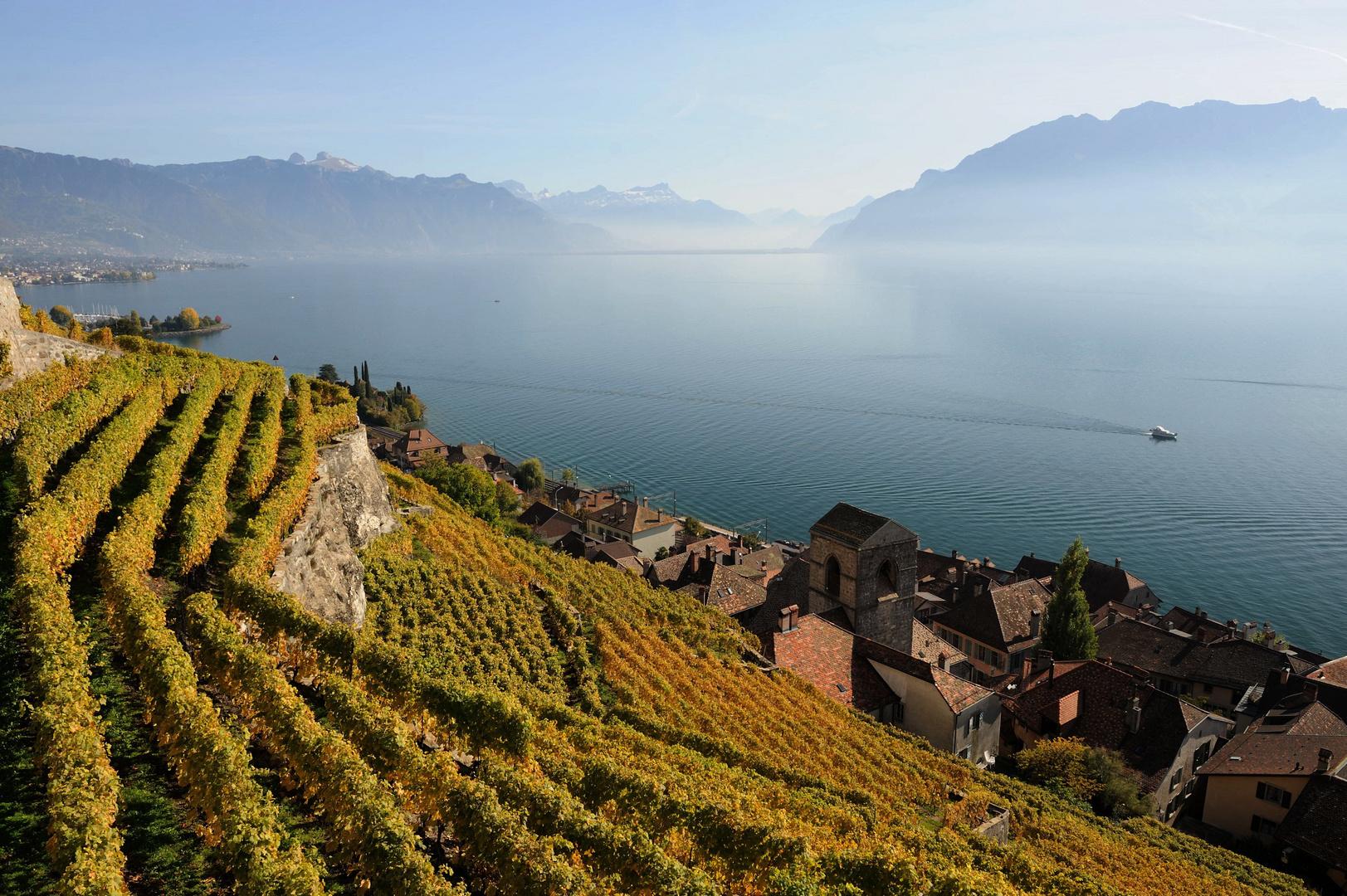 Le vignoble du Lavaux et le lac Léman