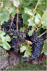 Le vin sera bon :))