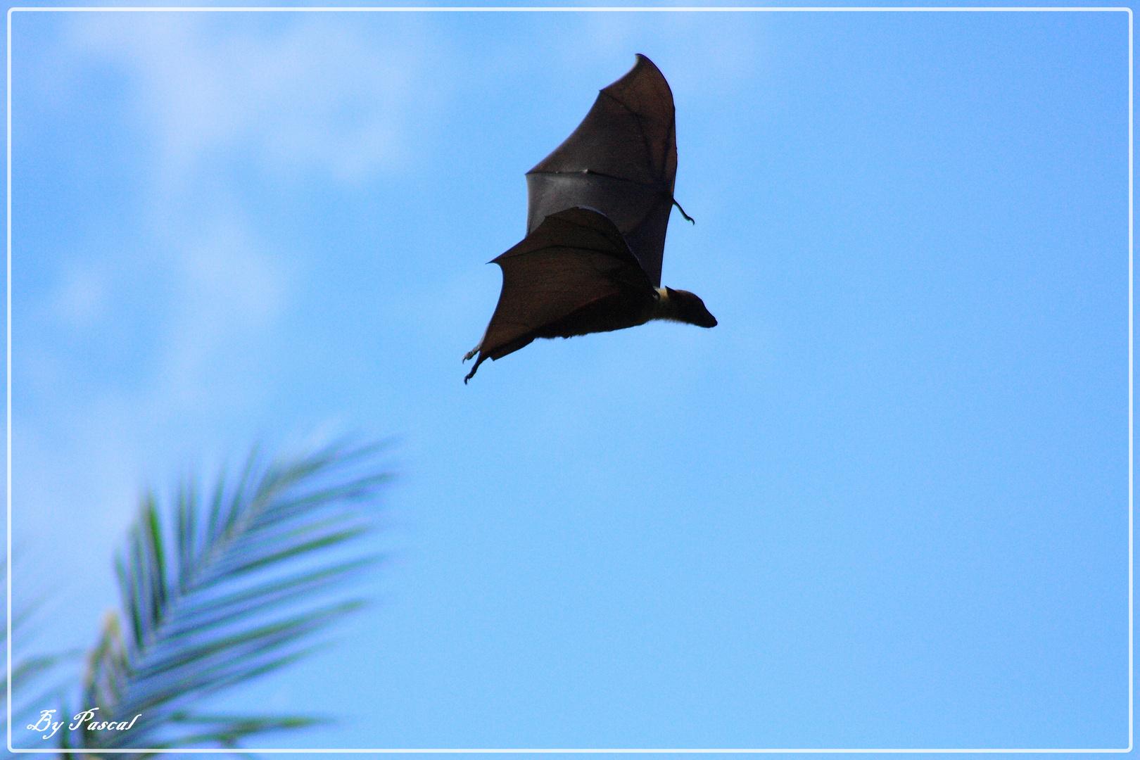 Le vol de Batman
