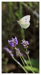Le vol du papillon