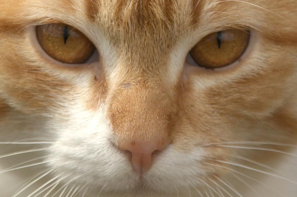 le yeux du chat !!