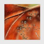 """Leaf meets drops"""