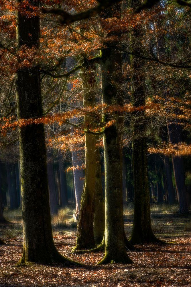 Leaf:Light