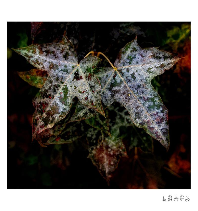 - leafs -