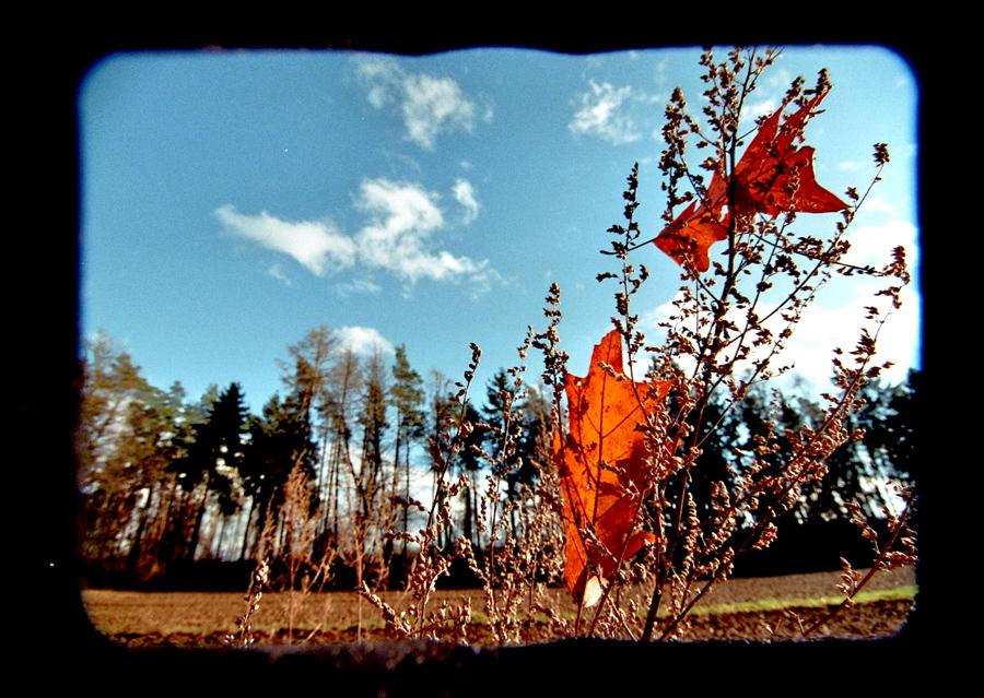 - _leaves -