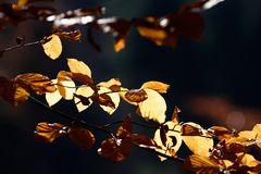 leaves ...
