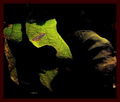 Leaves & Light
