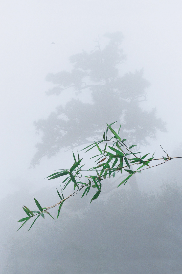 Leaves of Bamboo