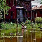 leben am inle see, burma 2011