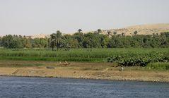 Leben am Nil IV