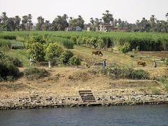 Leben am Nil V
